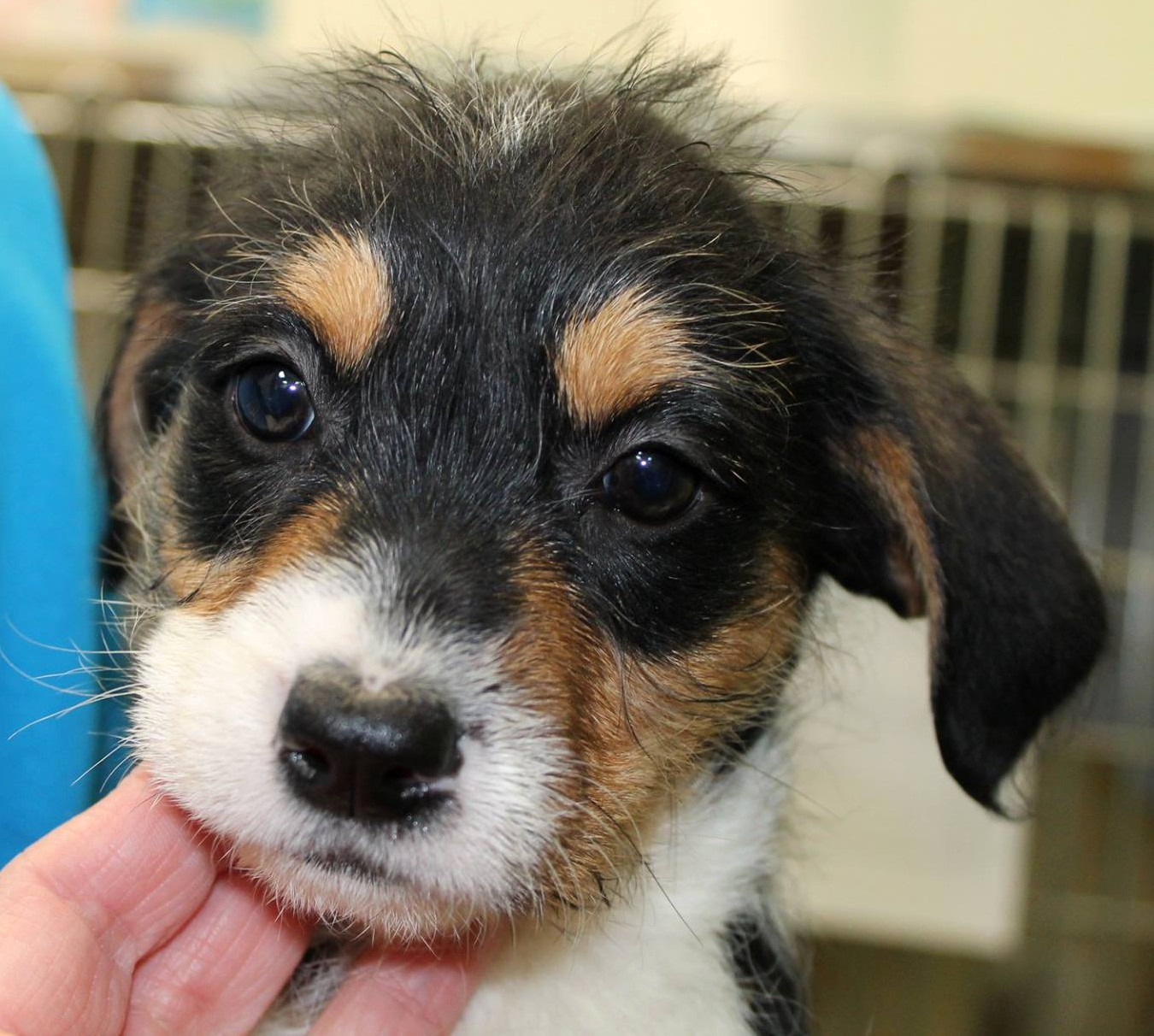 EGAPL Looks for Help Paying for Sick 'Frozen' Pups
